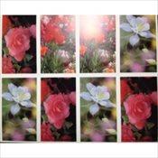Prayer Cards - Full Bloom