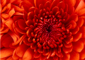 Jameson Flowers